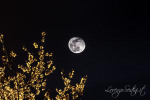 Luna e Mandorlo Canon 1d mark3