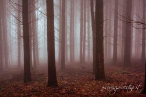 Paesaggio Nebbia tra Alberi